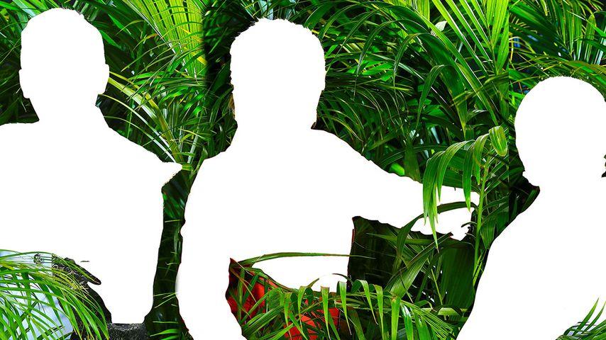 Dschungel-Prognose: Diese Camper müssen zittern