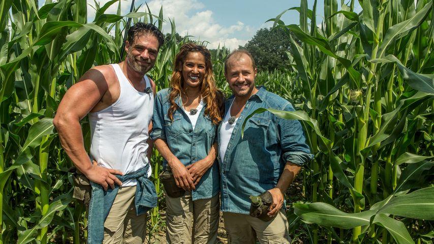 Kein Quoten-Highlight: Sommer-Dschungel verliert Zuschauer