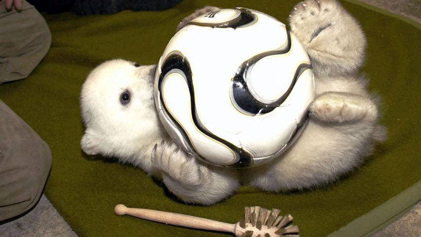 Zum 5. Todestag: So süß war Knut, der kleine Eisbär