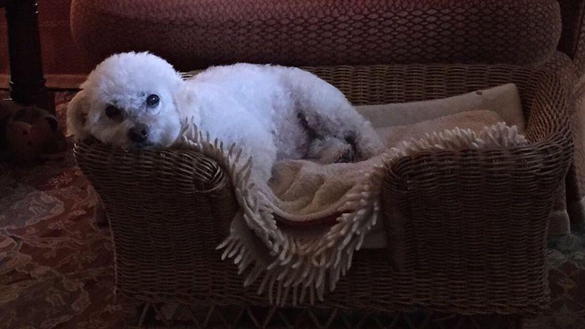 Freddie, der Hund von Michelle Pfeiffer