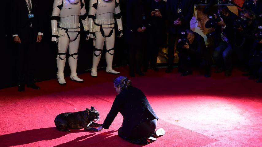 """Carrie Fisher und ihr Hund Gary bei der """"Star Wars: The Force Awakens""""-Europapremiere"""