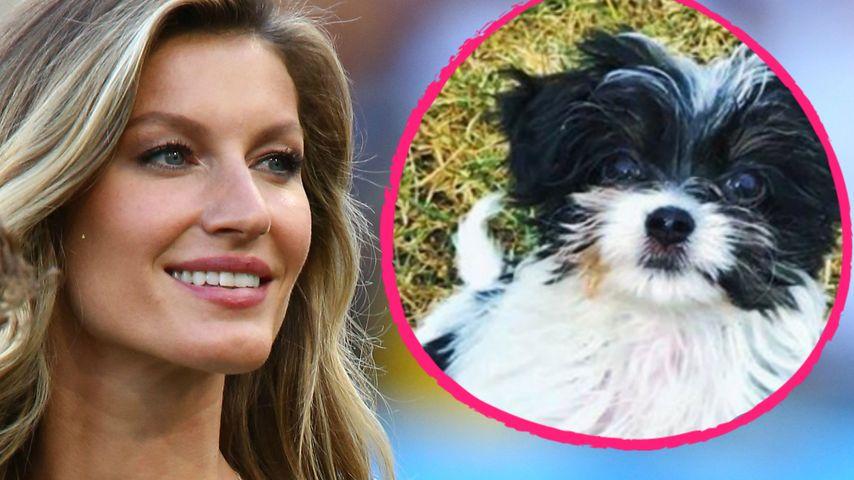 Hunde-Retterin: Gisele Bündchen zeigt neues Familienmitglied