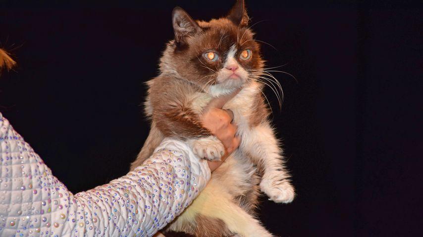 1 Million Euro? So teuer soll ein Grumpy-Cat-Auftritt sein!