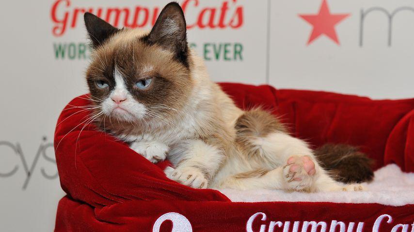 Grumpy Cat in San Francisco