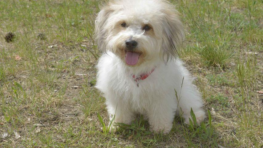 Neuer GZSZ-Hund: So mischt Chucho das Soap-Set auf!