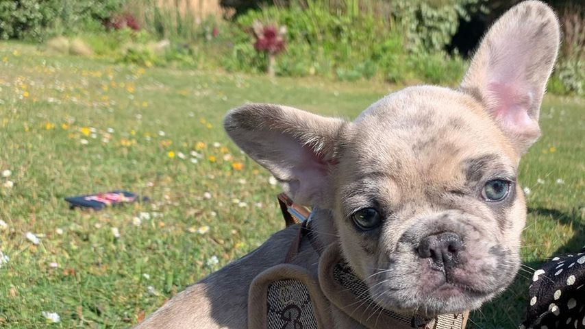 Hund Trüffel von Holly Ramsay, Mai 2020
