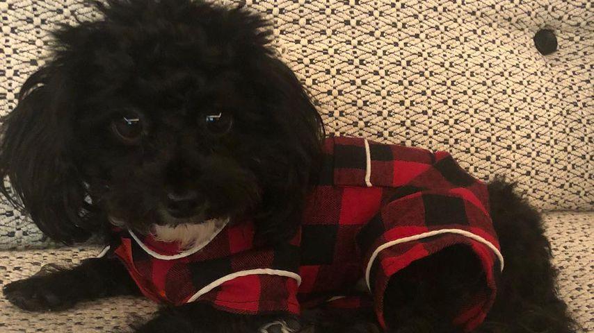 Hund von Schauspielerin Amy Schumer