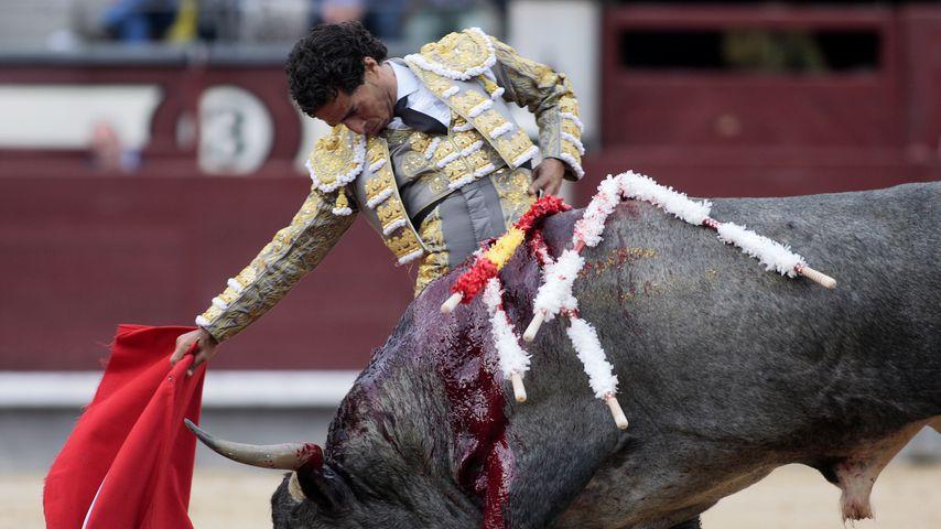 Toter Torero: Tierschützer fordern Verbot von Stierkämpfen!