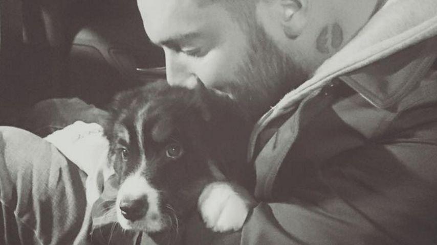 Hundeliebe: Welcher Promi hat den süßesten Vierbeiner?