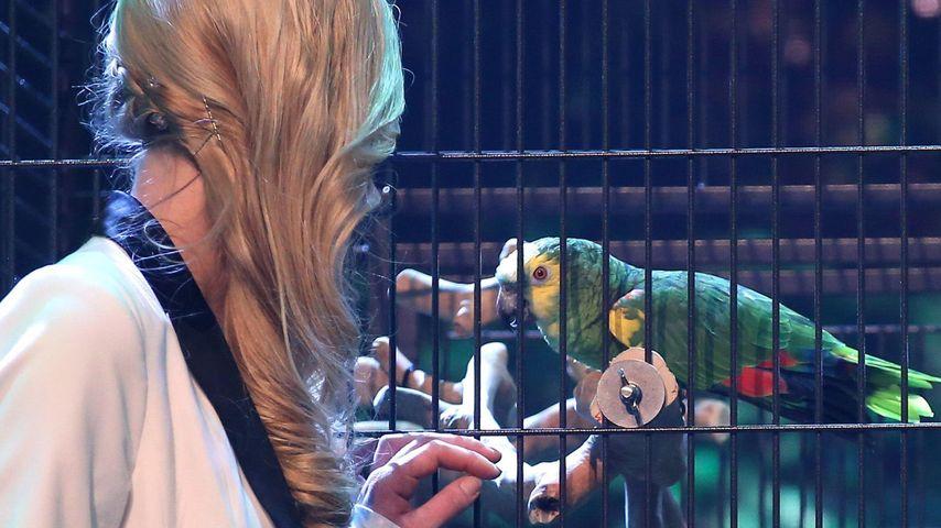 Supertalent-Finale: So trainiert Papagei Jacko