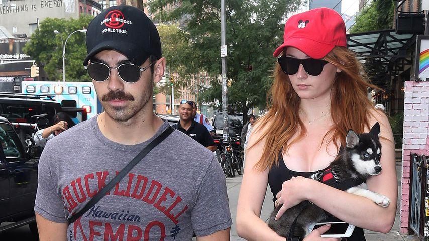 Joe Jonas und Sophie Turner mit ihrem Hündchen in New York