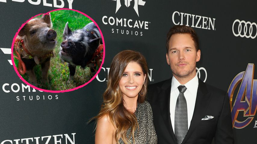 Zum B-Day: Katherine schenkt Chris Pratt zwei echte Schweine