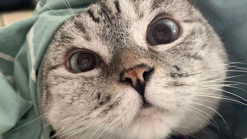 Weltrekord: Katze Nala hat im Netz über vier Millionen Fans!