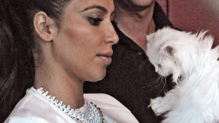 Kim Kardashians Katze Mercy darf zum Tier-Friseur