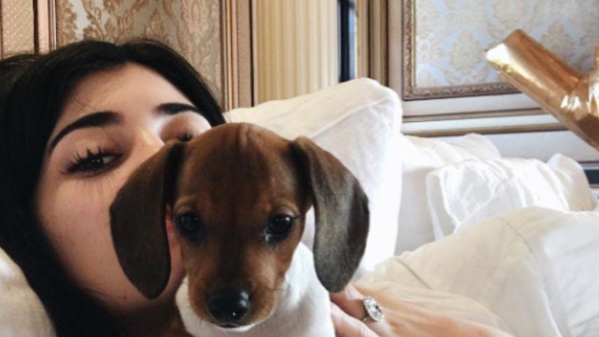 Pre-Geburtstags-Geschenk: Das ist Kylie Jenners neuer Puppy