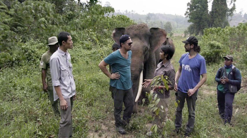 "Leo DiCaprio in Indonesien für ""Before The Flood"""