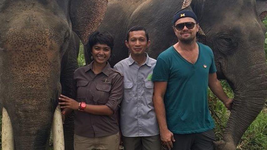 Einreiseverbot? Leonardo DiCaprio droht Ärger in Indonesien!