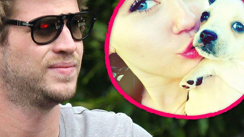 Hunde-Verbot: Liam hat Mileys Besessenheit satt!
