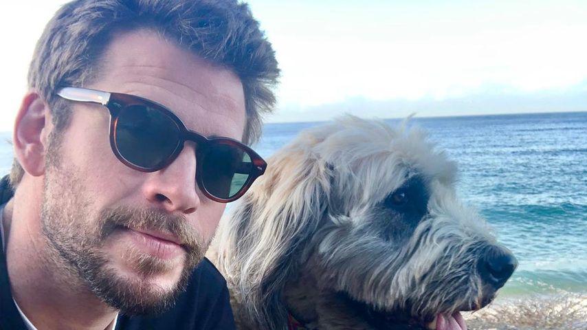 Liam Hemsworth im November 2019