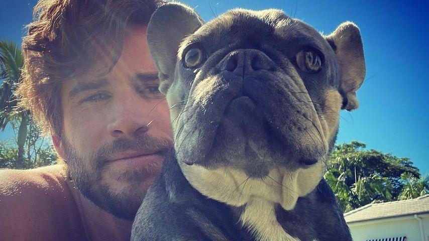 """Liam Hemsworth macht Fans mit seinem """"Nasenring"""" verrückt"""
