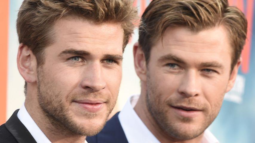 """Liam und Chris Hemsworth auf der Premiere von """"Vacation – Wir sind die Griswolds"""""""