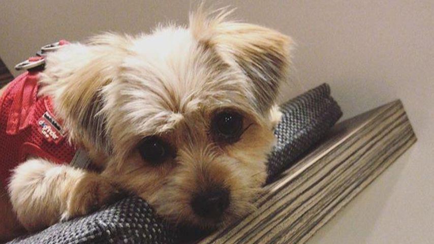 YouTube-Star LionTs Hund