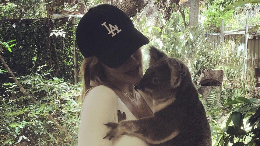 Niedliche Ablenkung: PLL-Lucy Hale schmust mit süßem Koala