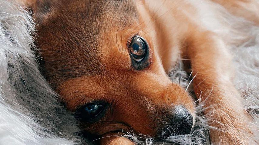 Mercedes, der Hund von Bachelor-Babe Janine Christin Wallat