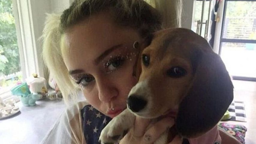 "Miley Cyrus' Hund bekam einen Stromschlag am ""The Voice""-Set"