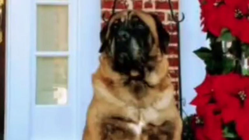 Millie Bobby Browns Hund Dolly