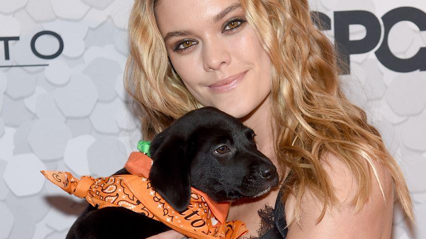 Dog-Date: VS-Model Nina Agdal mit Welpen auf rotem Teppich!