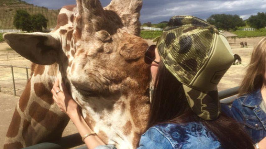 Nina Dobrev in Flirt-Laune: Dicker Kuss für eine Giraffe!