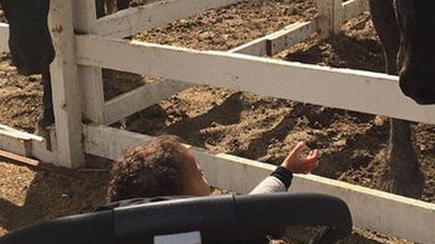 Hoppe, hoppe, Reiter: North West im Pferde-Fieber
