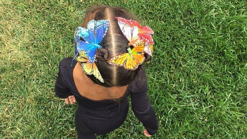Nanu! Wer ist denn dieser kleine Schmetterling?