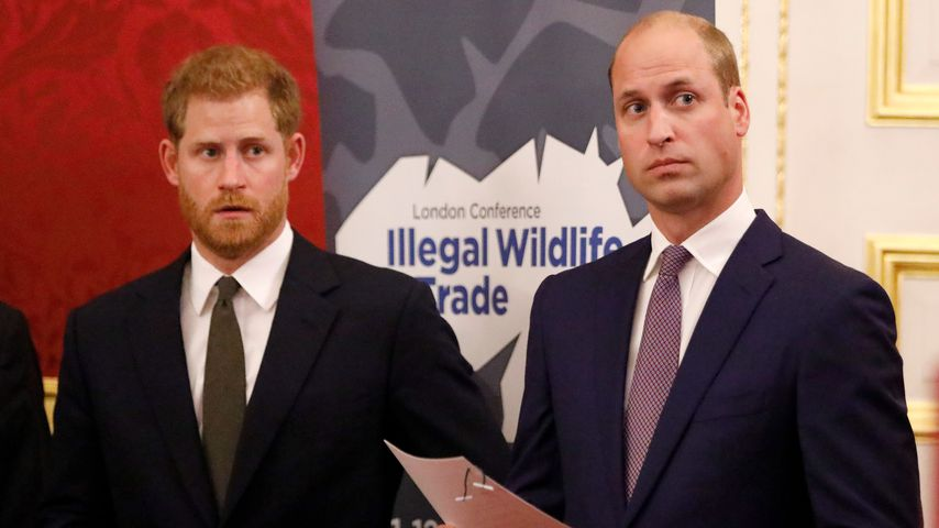 Prinz Harry und Prinz William bei einer Konferenz in London