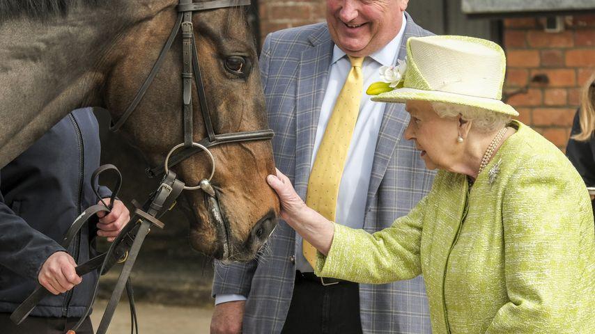 Kleine Queen, große Pferde: Elizabeth auf Tuchfühlung