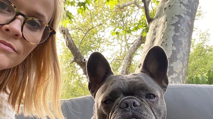 """""""Herz gebrochen"""": Reese Witherspoon trauert um ihren Hund"""
