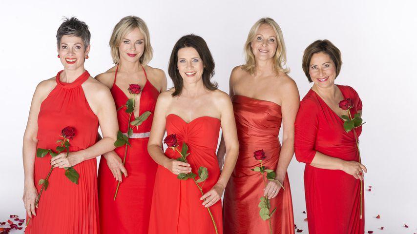 """""""Rote Rosen"""": Cheryl Shepard, Saskia Valencia, Patricia Schäfer, Anne Moll und Annett Kruschke"""