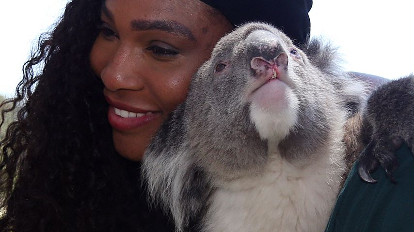 Kuschelig! Serena Williams knuddelt Koala Sunshine
