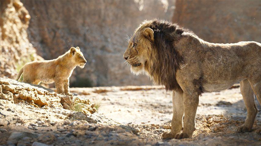 """""""König der Löwen""""-Szene ist nicht animiert, sondern echt"""