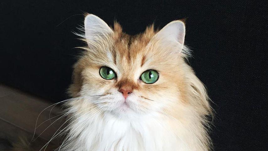 Vergesst Grumpy Cat: DAS ist die schönste Katze der Welt!