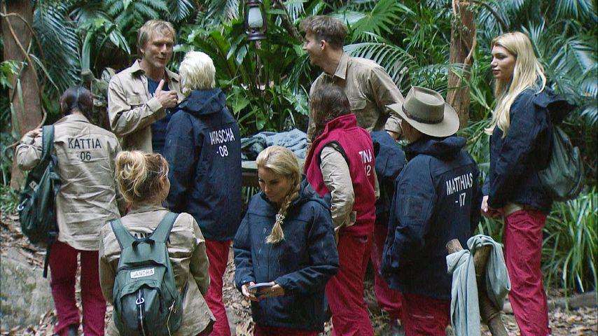 Die Kandidaten im Dschungelcamp