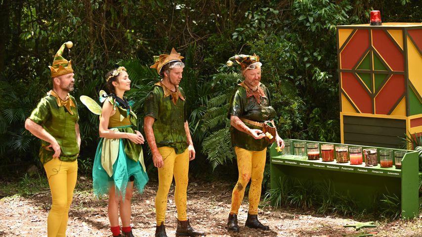 Sven Ottke, Anastasiya Avilova, Raúl Richter und Markus Reinecke an Tag 11 im Dschungelcamp