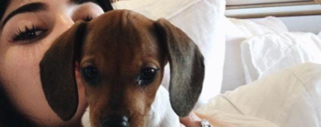 Kylie Jenner mit ihrem Puppy Penny